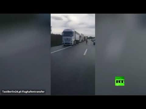 شاهد حماران وحشيان يثيران فوضى بأحد الطرق السريعة في ألمانيا