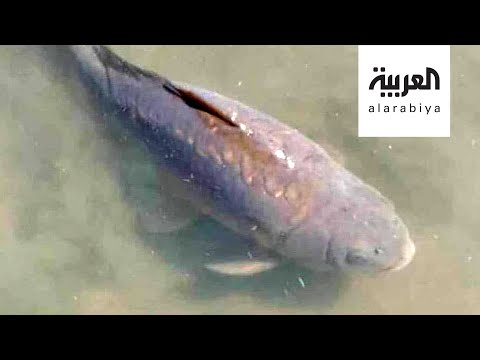 شاهد حداد في زامبيا على سمكة ورئيس البلاد ينعيها