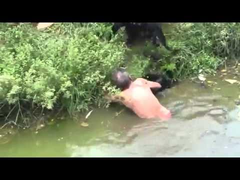 مجموعة من القردة تهاجم رجلًا سكيرًا وتصيبه