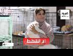 شاهد القصة الكاملة لـمريم البلوشي مع أكثر من 480 قطة