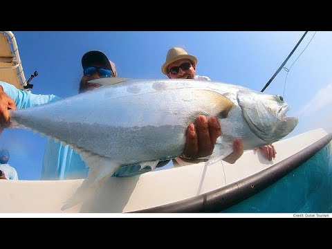 مغامرة شيقة في البحر لاصطياد سمكة فريدة في دبي