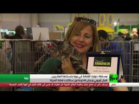 شاهد معرض للقطط الفريدة في روما في الذكرى السنوية الـ20