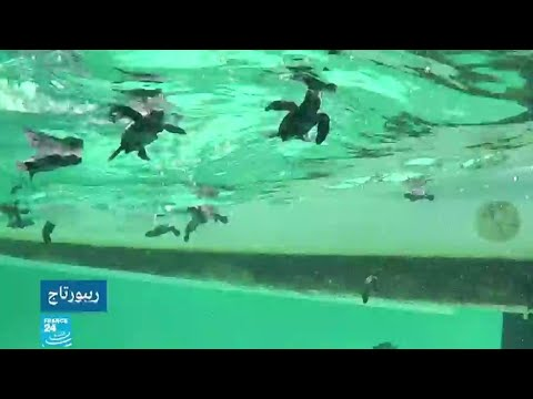 شاهد جزر قوريا التونسية محميات طبيعية تحتضن الكاوان