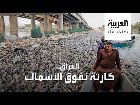 شاهد أطنان من الأسماك نافقة في العراق والسبب لا يزال مجهولا