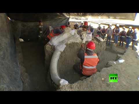 شاهد العثور على أكبر مقبرة ماموث عملاقة في أميركا اللاتينية