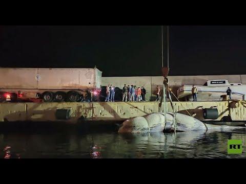 العثور على حوت نافق عملاق قبالة جزيرة كابري في جنوب إيطاليا