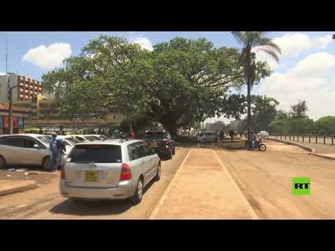 شاهد الرئيس الكيني يُصدر مرسومًا لإنقاذ شجرة تين عتيقة من القطع