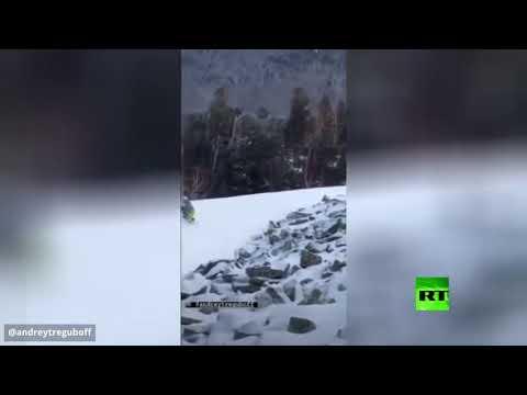 معركة بين طائر حجل ومتزلج  روسي